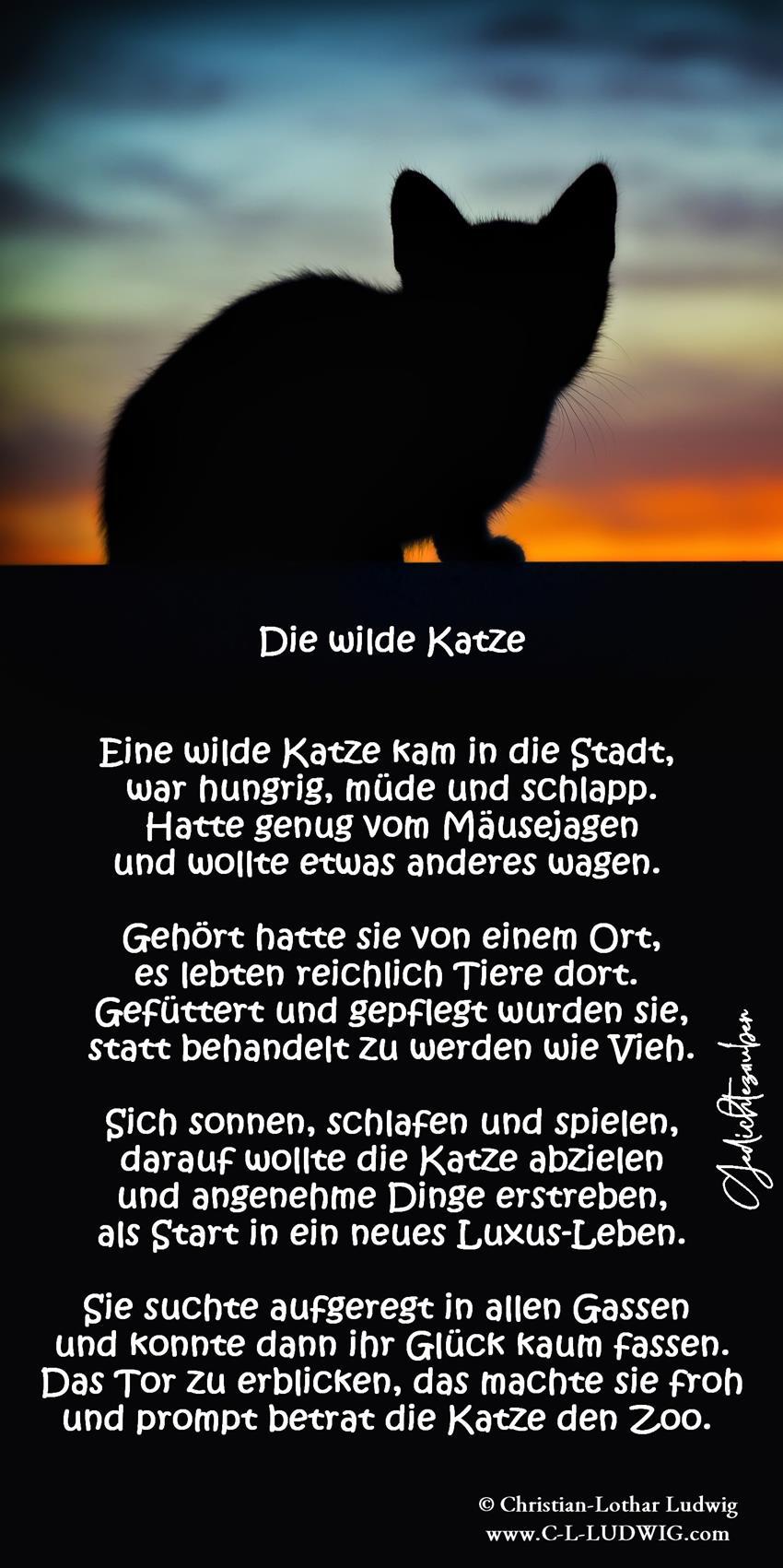 Die wilde Katze (Copy)