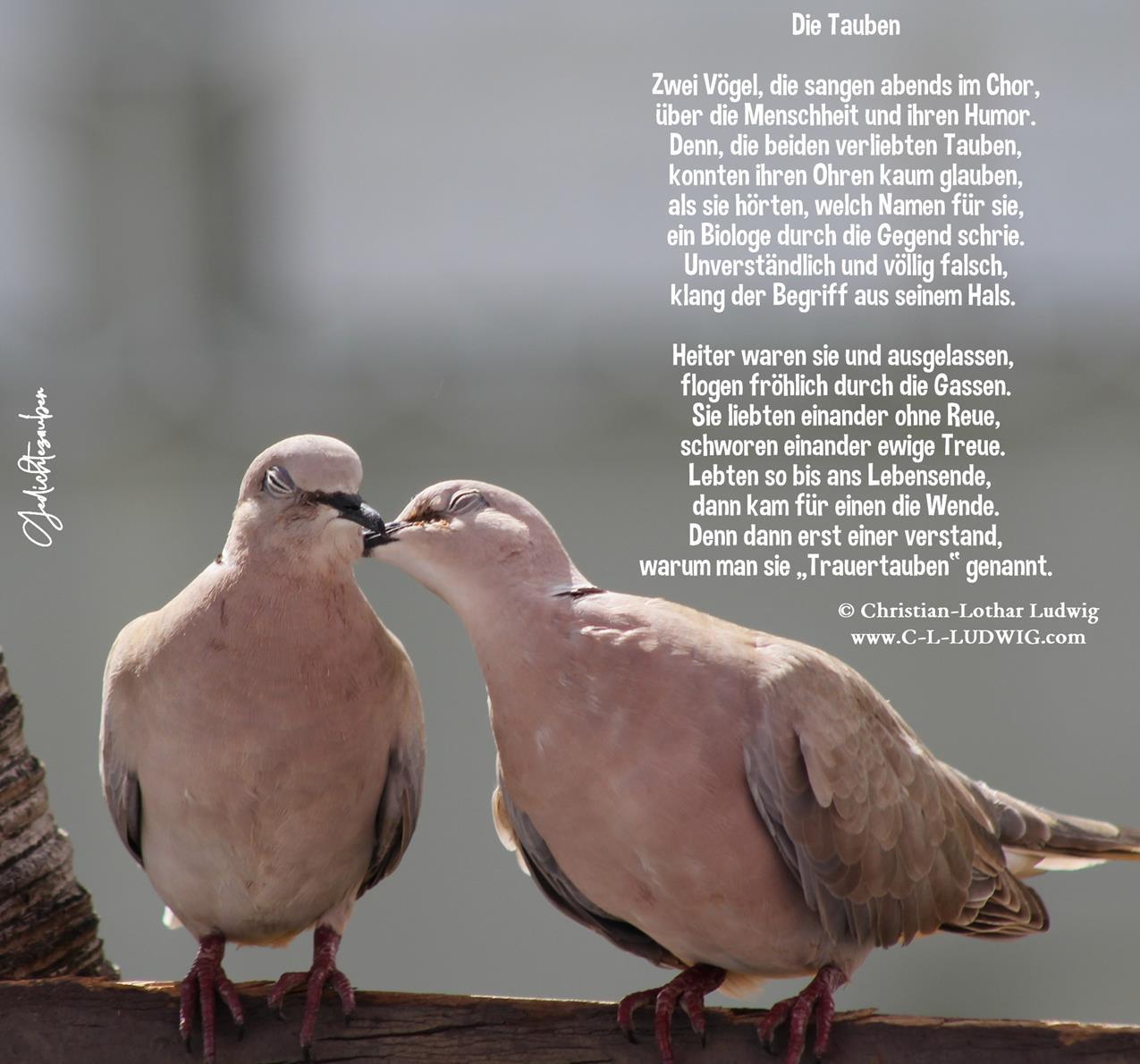 Die Tauben (Copy)